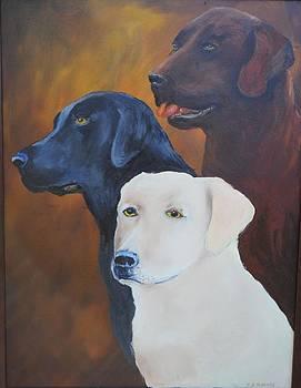 Labrador Trio by James Higgins