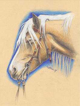 Lacy Drawing by Pam Little