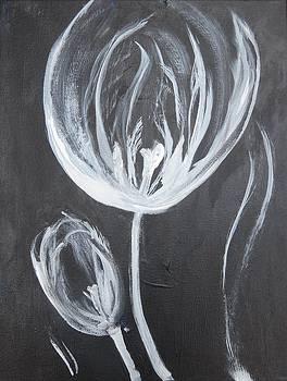 Lacy Tulip by Carolyn Speer