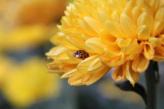 Lady Bug by Adrienne Franklin