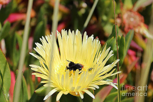 Ladybug and a Bumblebee by Kevin Ashley