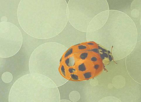 Ladybug Dreams by Lindy Brown