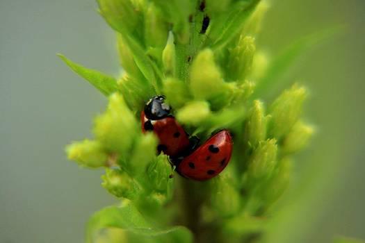 Ladybug in green grass by Daliya Photography