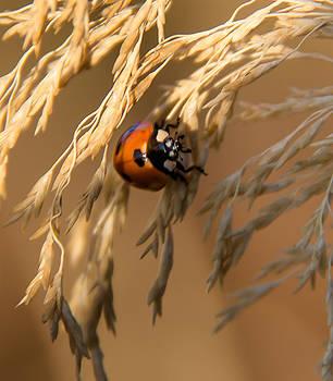 Ladybug by Melodie Douglas