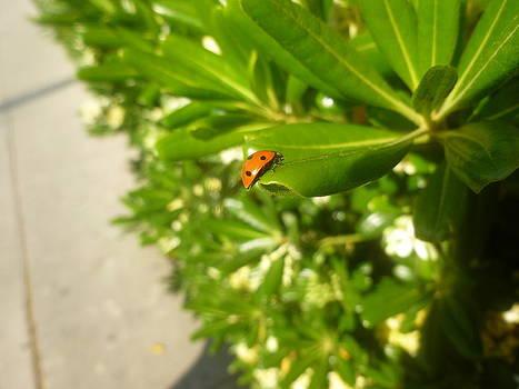 Ladybug by Montana Wilson