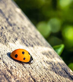 Ladybug Nap by Janice Sullivan