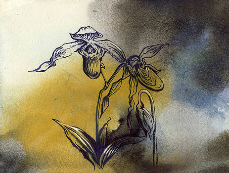 Alfred Ng - ladyslipper orchid drawing