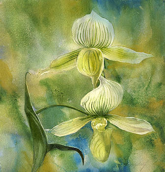 Alfred Ng - ladyslipper orchid with blues