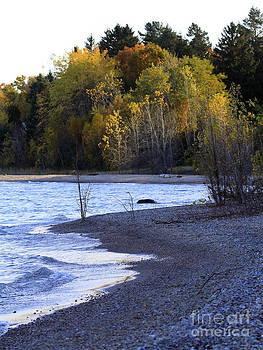 Lake Huron Shoreline in the Fall  by Kathy DesJardins