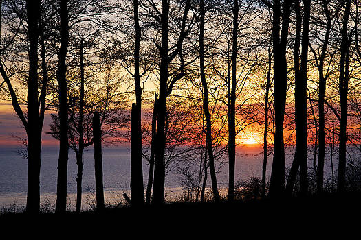 Mary Lee Dereske - Lake Michigan Sunset with Silhouetted Trees