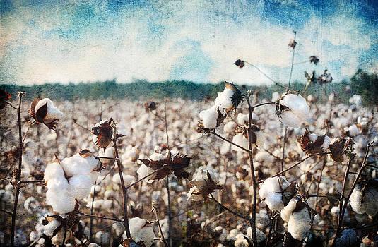 Land of Cotton by Tara Richelle