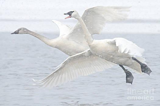 Larry Ricker - Landing in the Snow