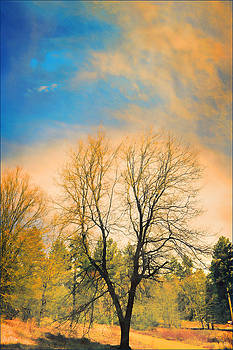 Landscape in Blue and Yellow  by Douglas MooreZart