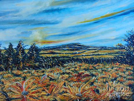 Landscape sunflowers field  by Drinka Mercep