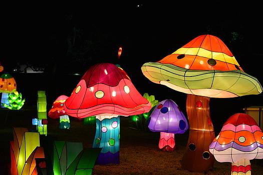 Lantern Mushrooms by Jim Martin