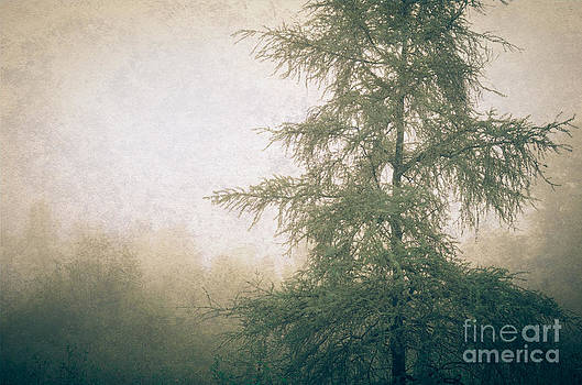 Larch in the Fog by Tiffany Rantanen