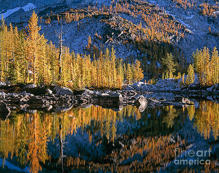 Larch Tree Reflection in Leprechaeun Lake  by Tracy Knauer