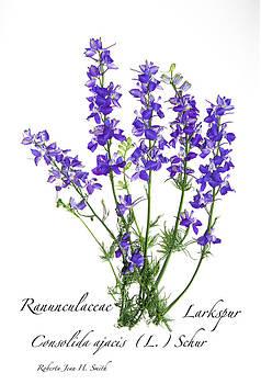 Larkspur Bouquet by Roberta Jean Smith