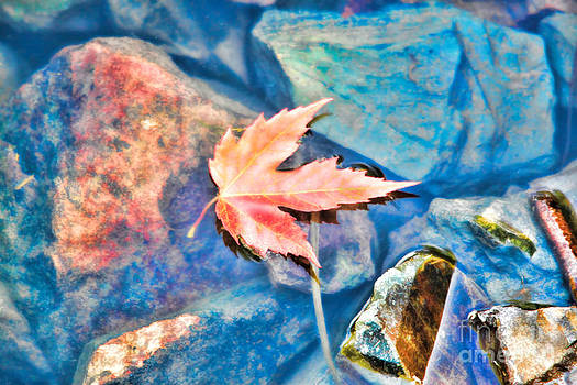 Last Fall  by Cathy  Beharriell