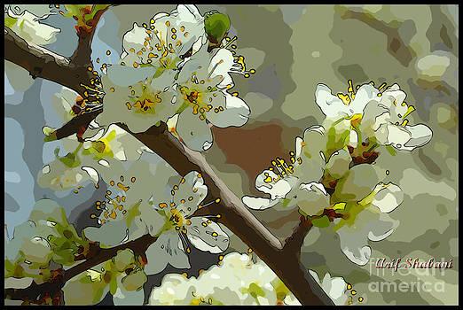 Last spring 01 by Arif Zenun Shabani