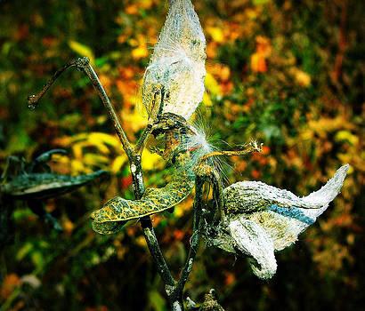 Late autumn flower by Slawek Sepko