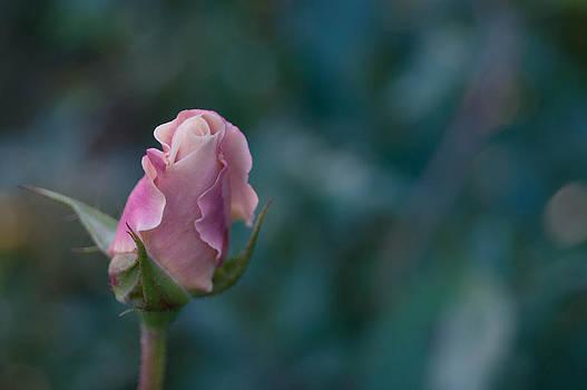 Late Bloom by Jen Baptist