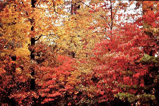 Late fall by Hugh Peralta