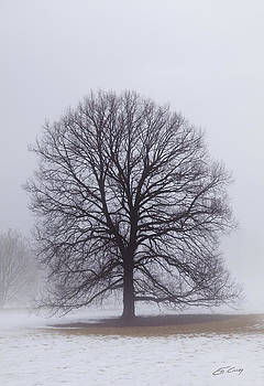 Late Winter Fog by Ed Cilley