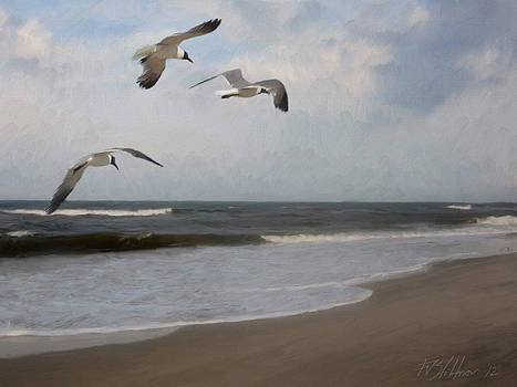 Laughing Gulls Over Nags Head by Forest Stiltner