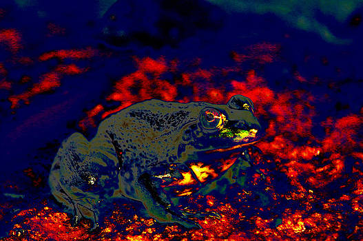 Lava Frog by Kim Pate