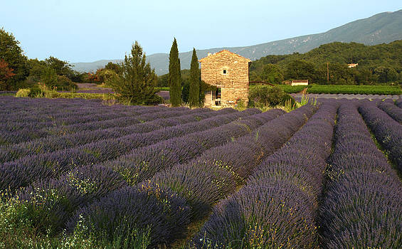 Lavender and Stone House by Robert Abramson