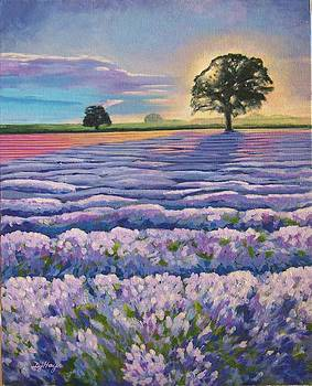 Lavender Bliss by Donna Hays