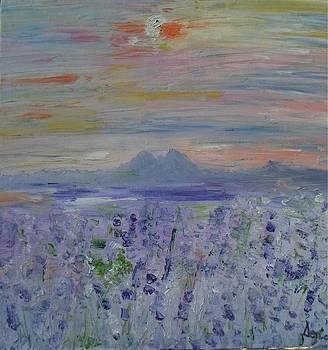 Lavender by Daniela Nedelea