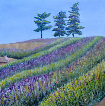 Lavender farm by Jennifer Richards