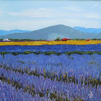 Lavender Farm with Tractor by Dorothy Jenson
