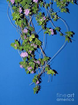 Lavender Lantana by Carolyn Burns Bass