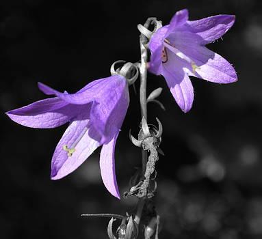 Lavender Love by Terri K Designs