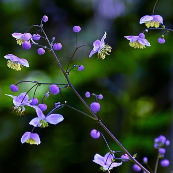 Byron Varvarigos - Lavender Mist Mobile