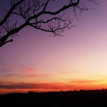 Lavender Skies by  Renee McDaniel