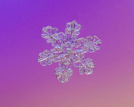 Tom Biegalski - Layered Snowflake