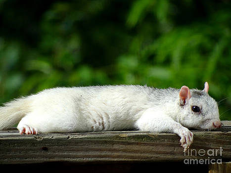 Lazy Days Of Summer by Crystal Joy Photography