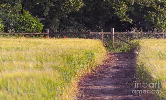 Svetlana Sewell - Leading Path