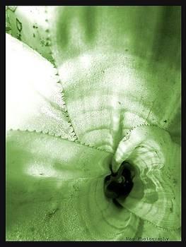 Leaf 3 by Maideline  Sanchez