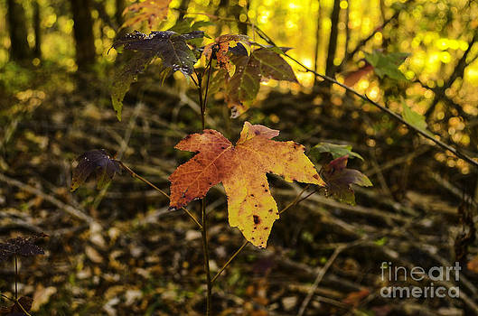 Leaf A Turning by Crissy Anderson