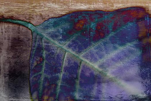 Scott Pellegrin - Leaf Abstract
