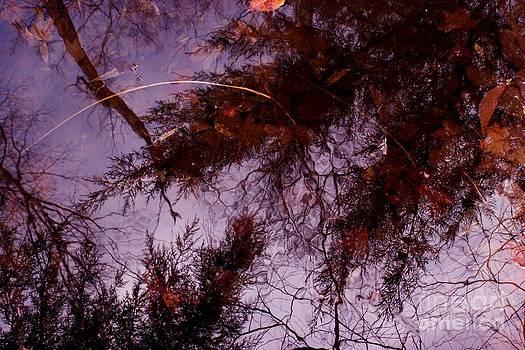 Leaf Abyss by Virginia Pakkala
