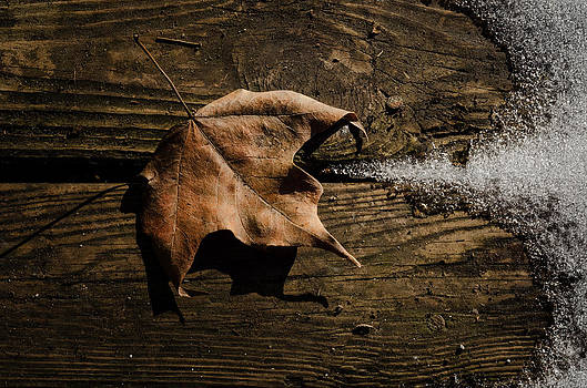 Leaf and Ice by Diana Boyd