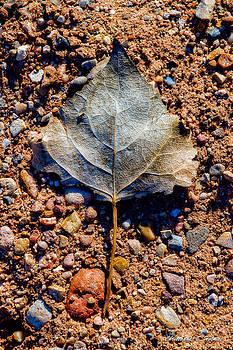 Christopher Holmes - Leaf in Grit
