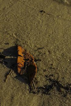 Leaf by Jennifer Burley