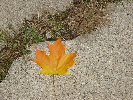 Leaf on Sidewalk by David Fiske